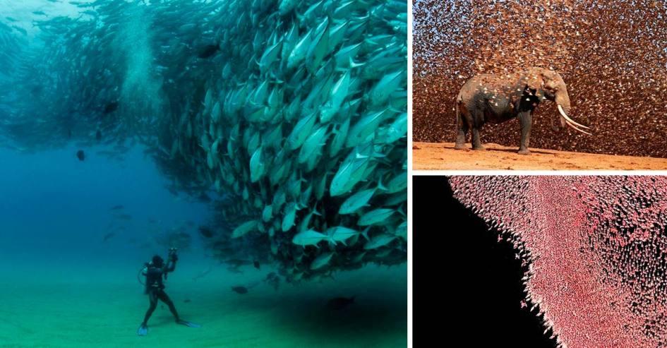 Grandes grupos de animales