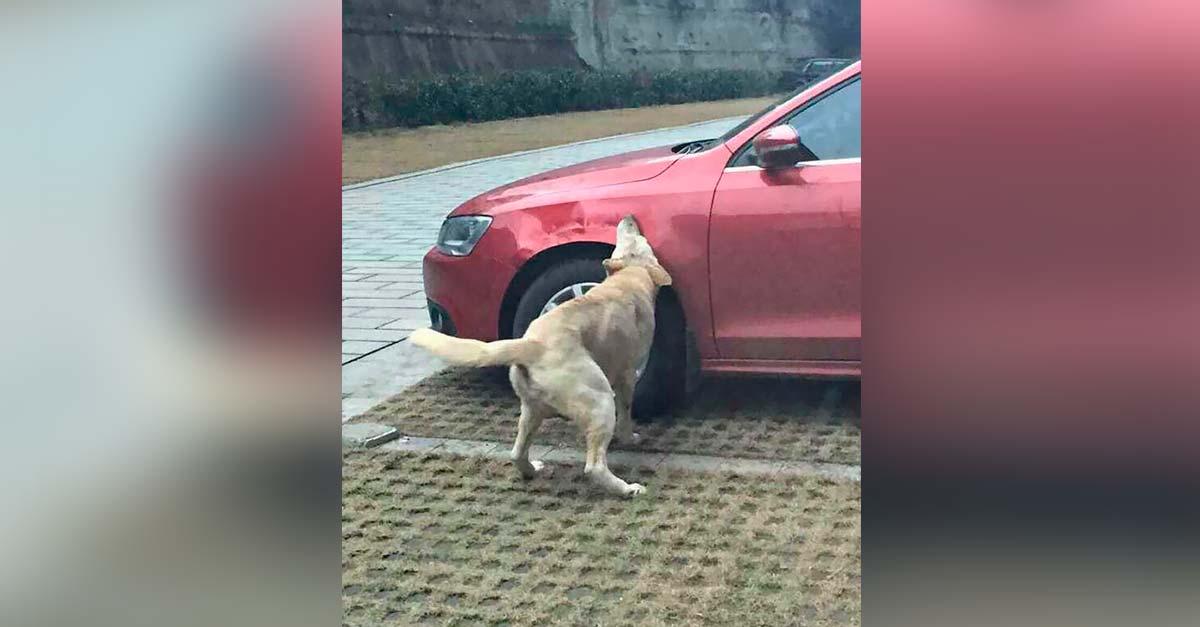 perro se venga