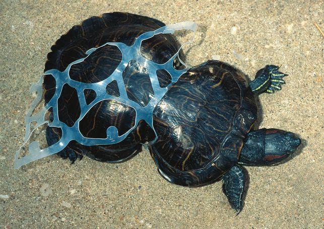 adidas hechas con plástico del océano