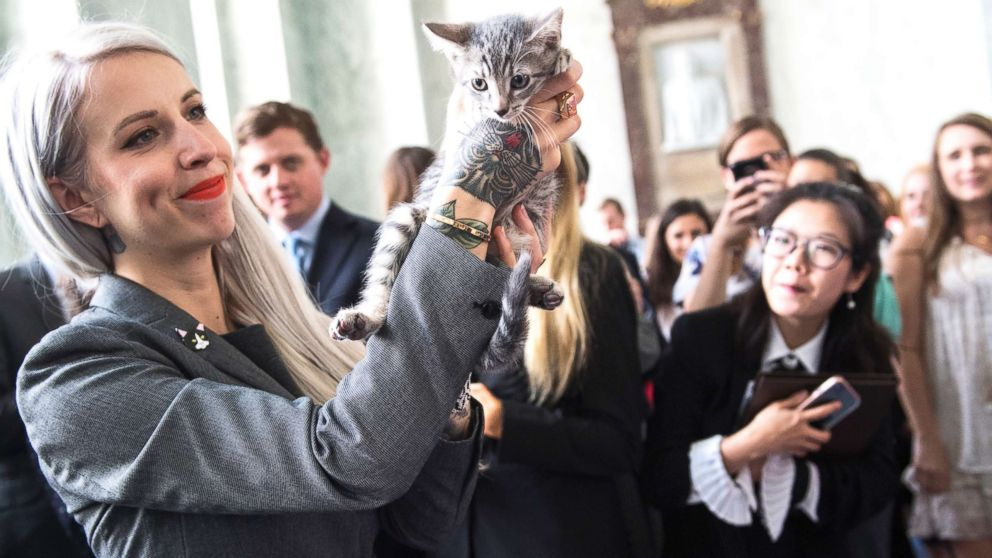 estados unidos ordena detener la experimentación en gatos