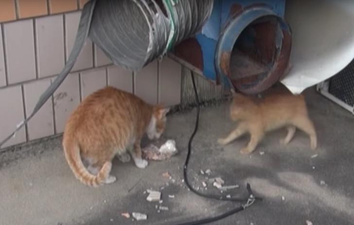 gata solo recibe comida en bolsas