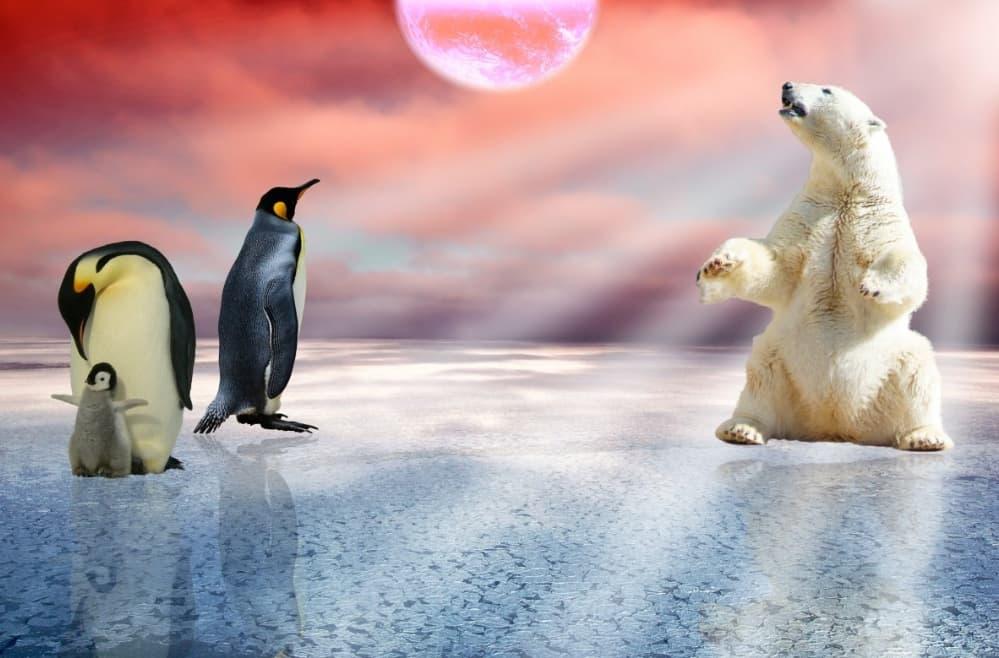 """Os cientistas alertam: """"Tudo indica que a sexta extinção em massa da Terra começou"""""""